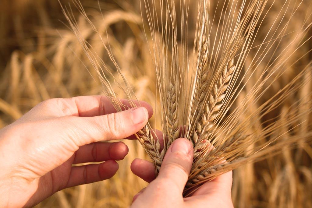 młyn producent mąki sprzedaż skup zboża Polska